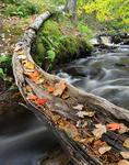 Log by Munising Falls